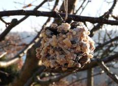 graines pour les oiseaux