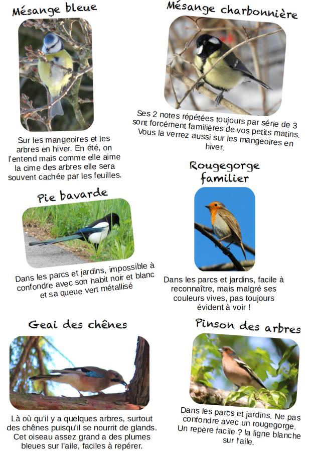 oiseauxprèsdecheznous2