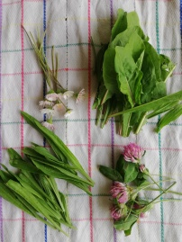 différentes herbes