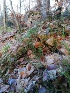 sol gelé à la forêt