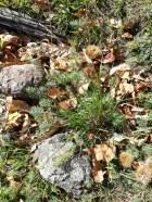 herbes dans forêt de châtaignier